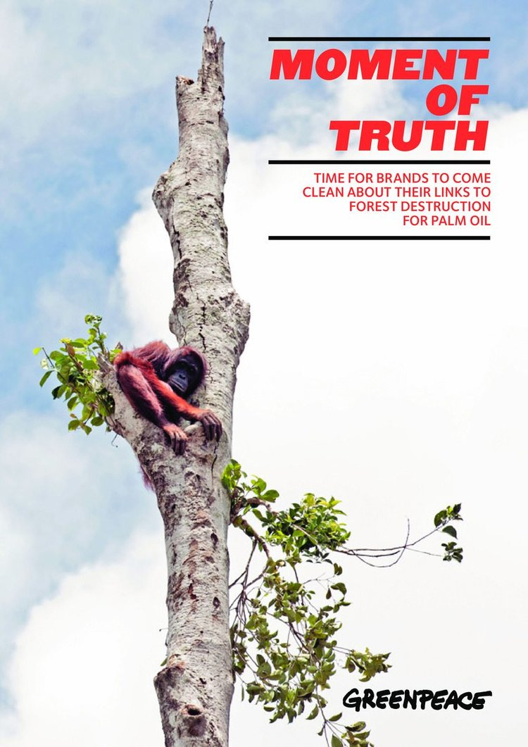 Greenpeace+article+image.jpg
