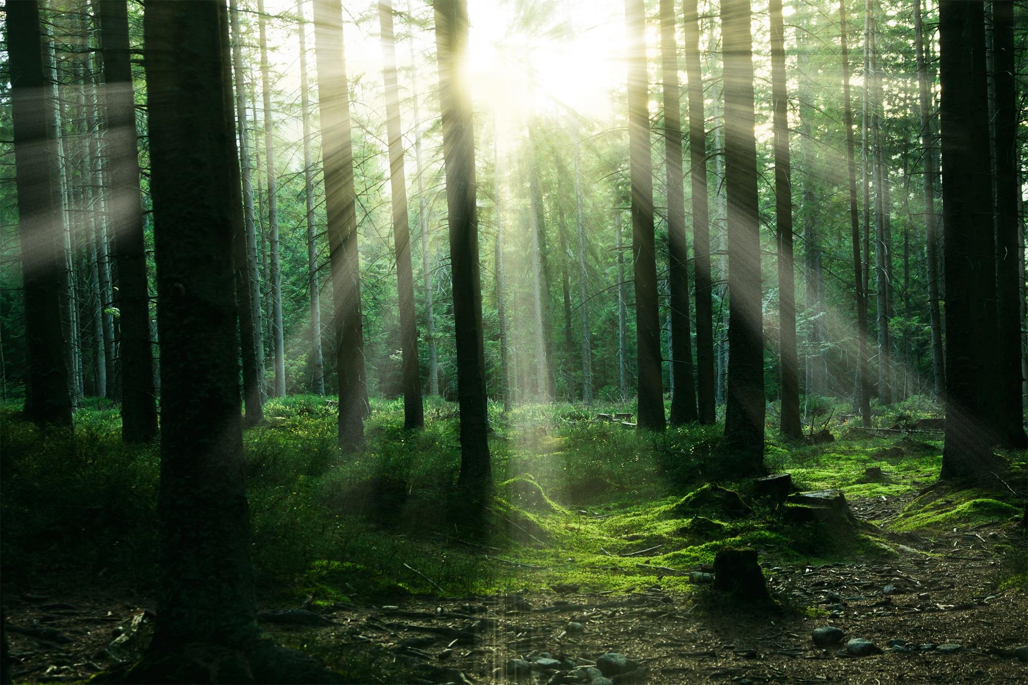 forest-2899654.jpg
