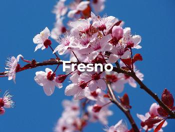 Fresno copy.jpg
