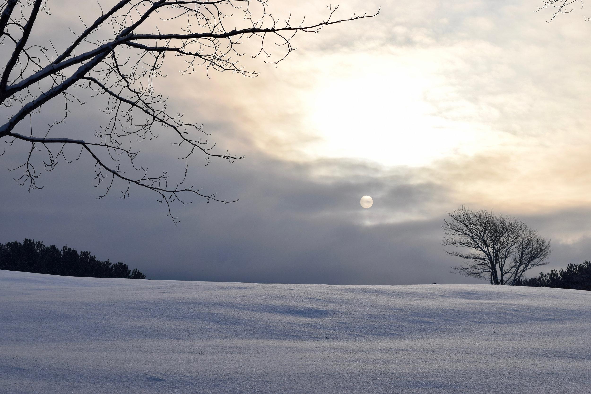 #1 Winter Sun