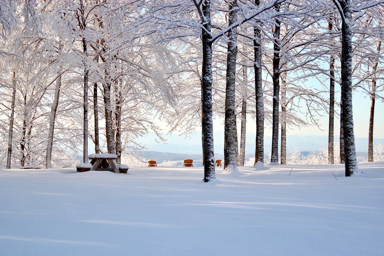 #2 Trees & snow