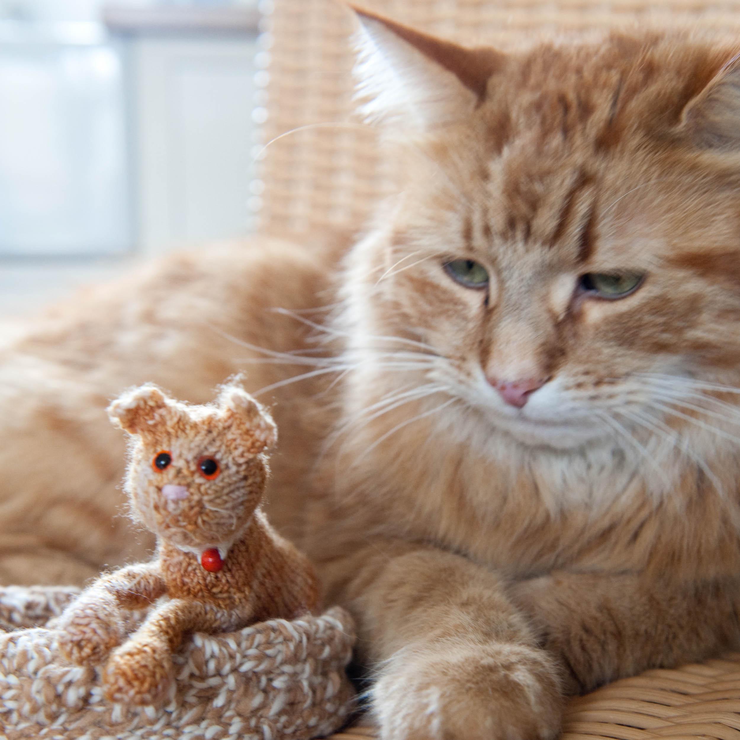 knit-pets-162.jpg