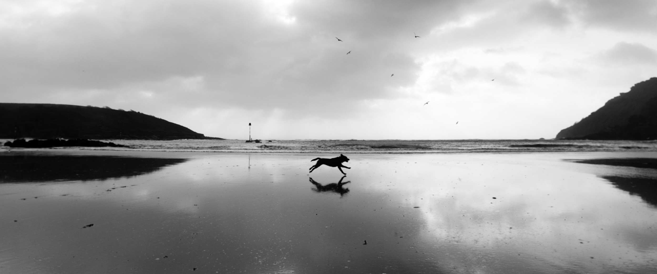 dog north sands 6x4.jpg