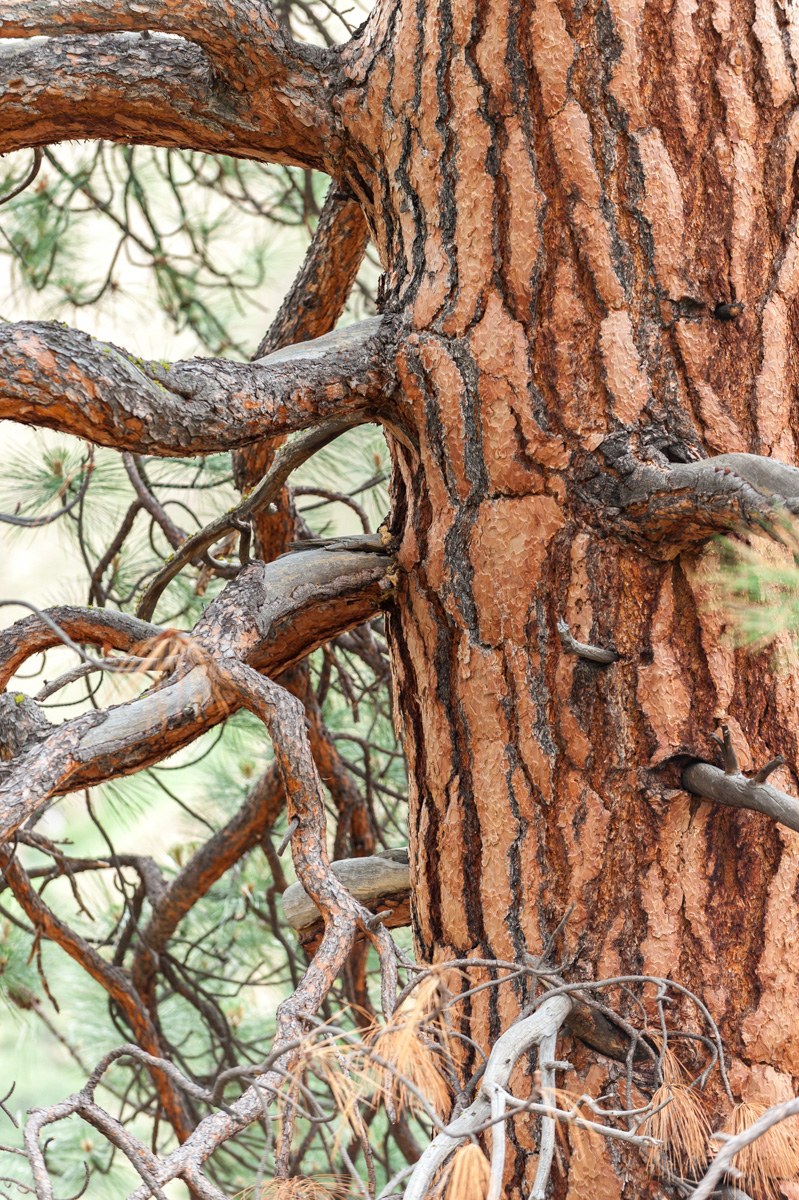 Life of trees -
