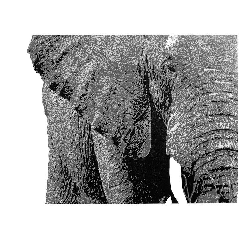 2. Elephant.jpg