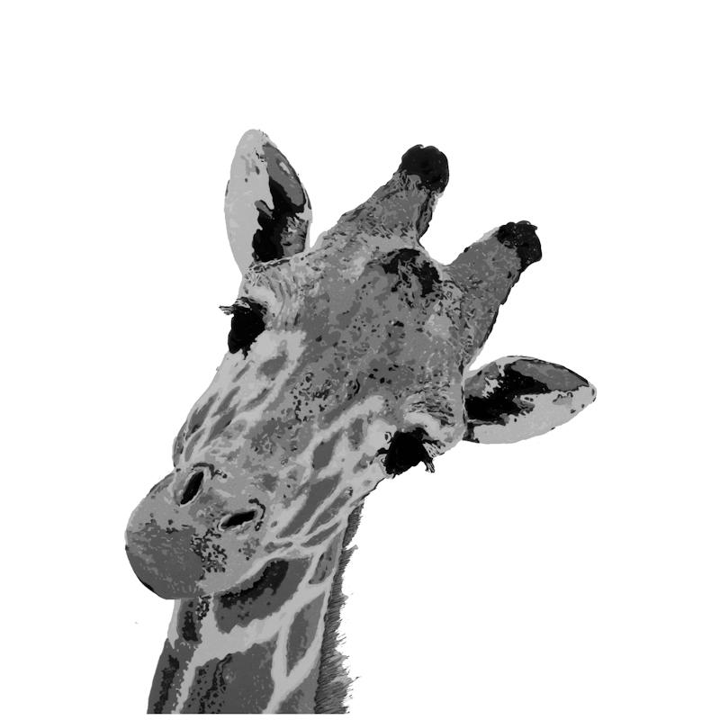 3. Giraffe.jpg