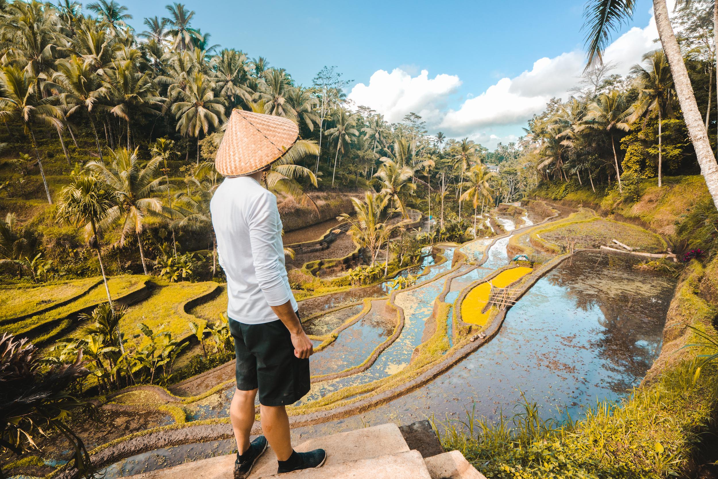 Tegallalang Rice terraces.jpg