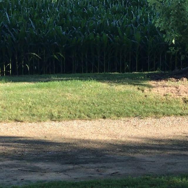 I think the bikes were a good idea. 😊 #ryckmansonthefarm