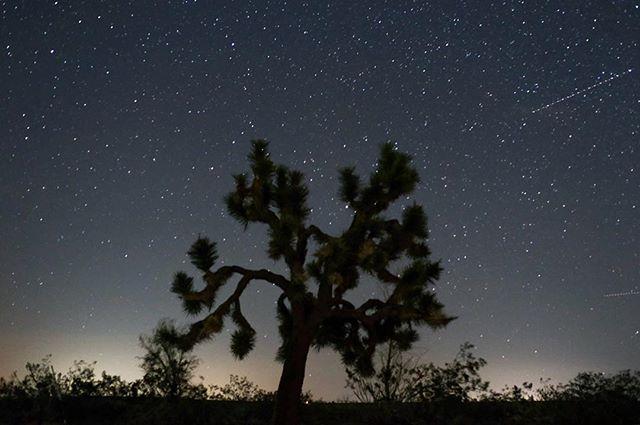 Starry Nights ✨💫✨
