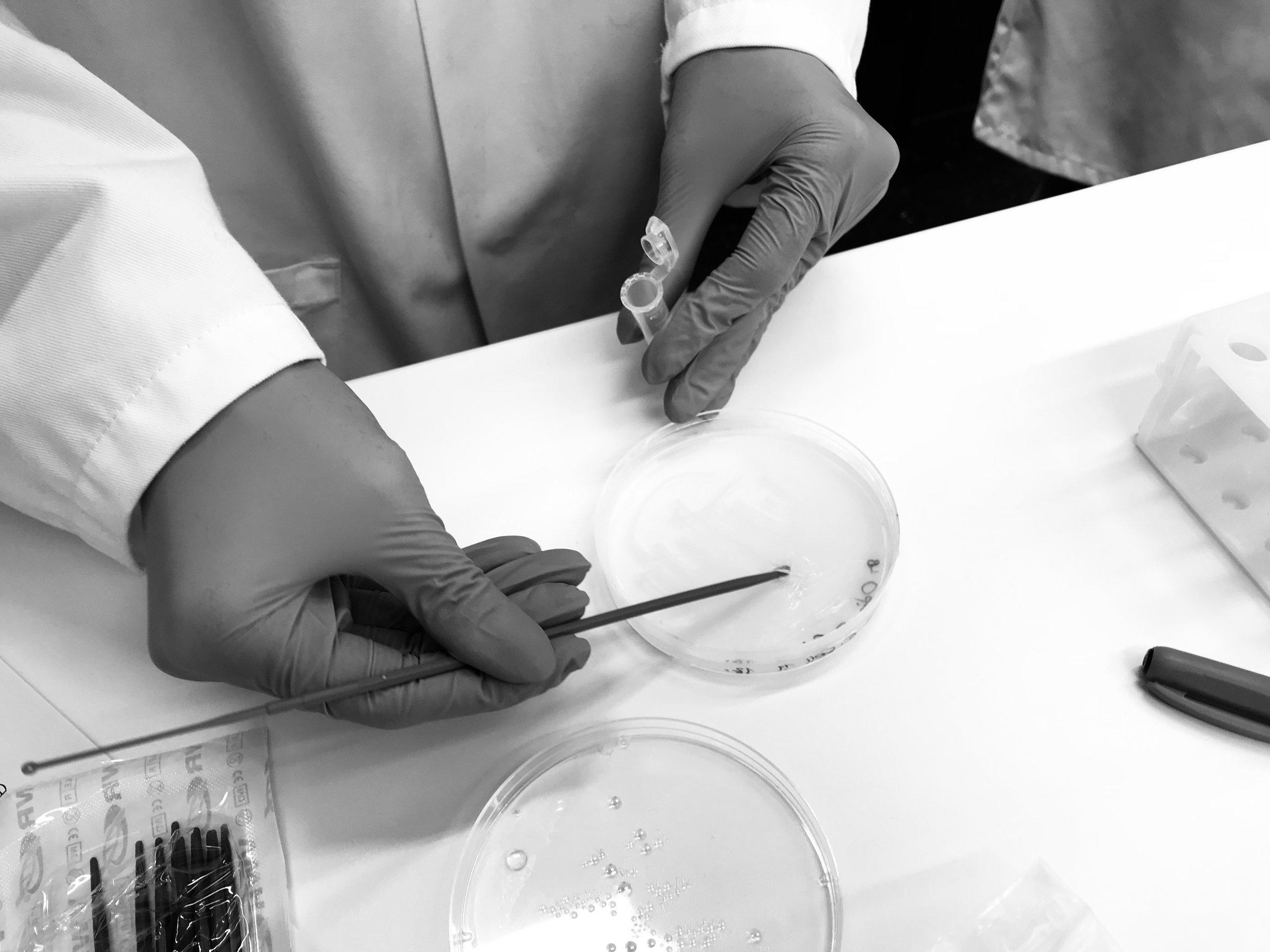 - CRISPR-cas9 workshops