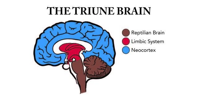 Triune Brain-01_0.jpg
