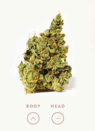Is this a cannabis description or a pregnancy test?