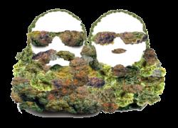 Cannabis. Education. News. Beard Bros.