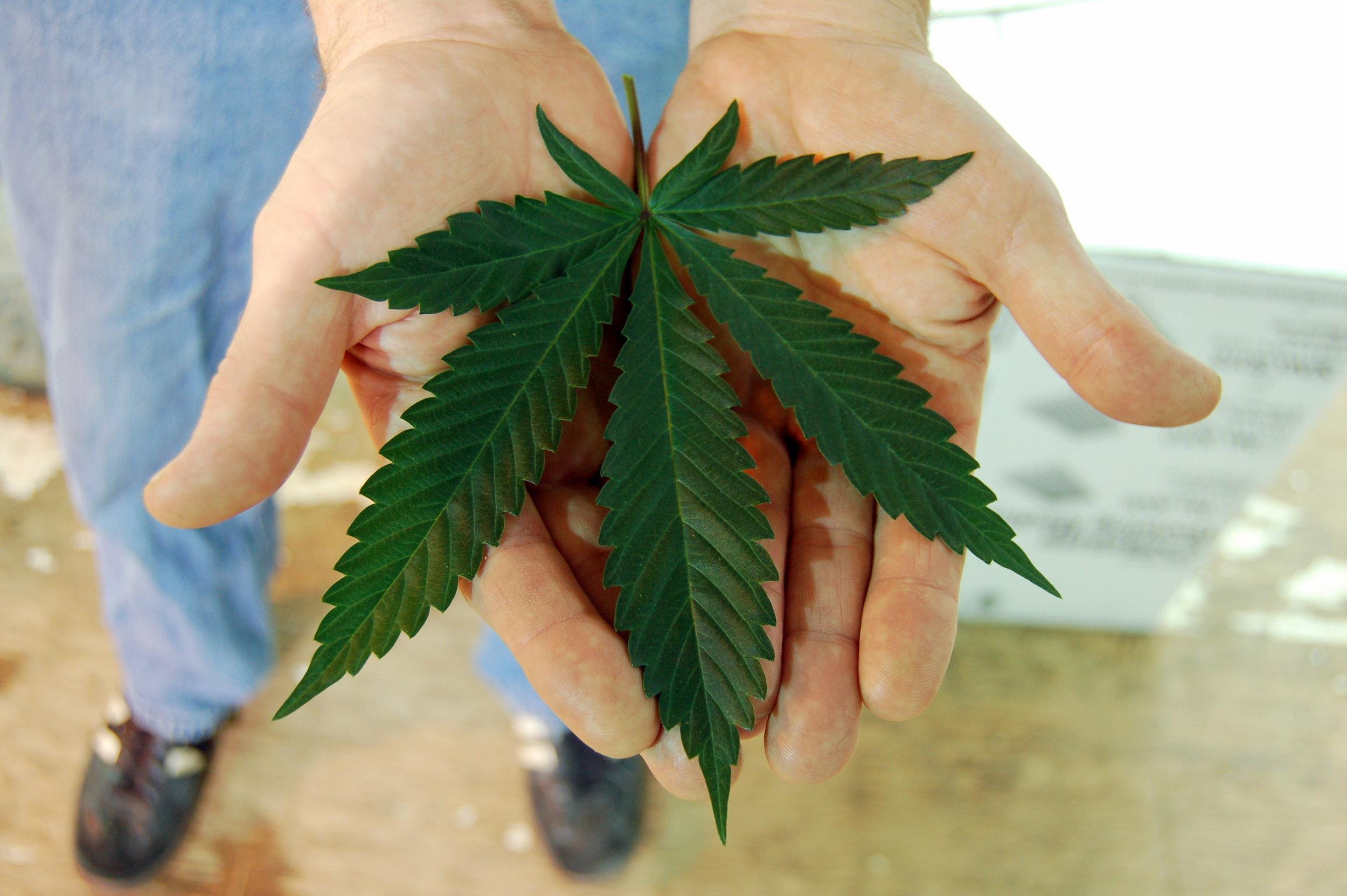 leaf in hand.JPG