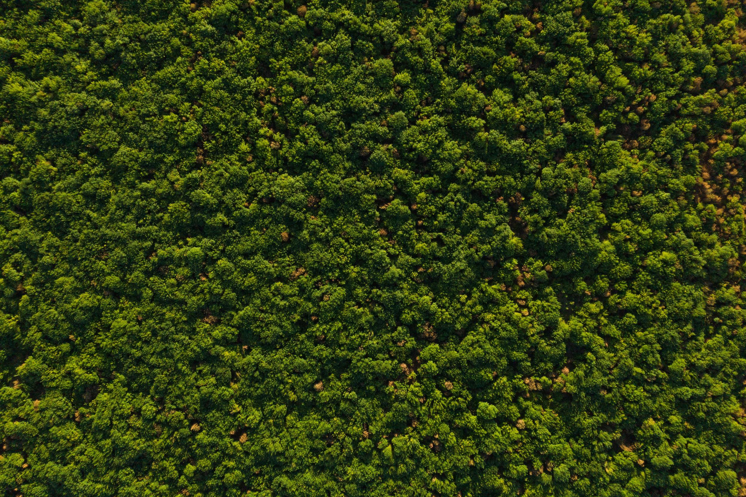 JungleCrop4.jpg