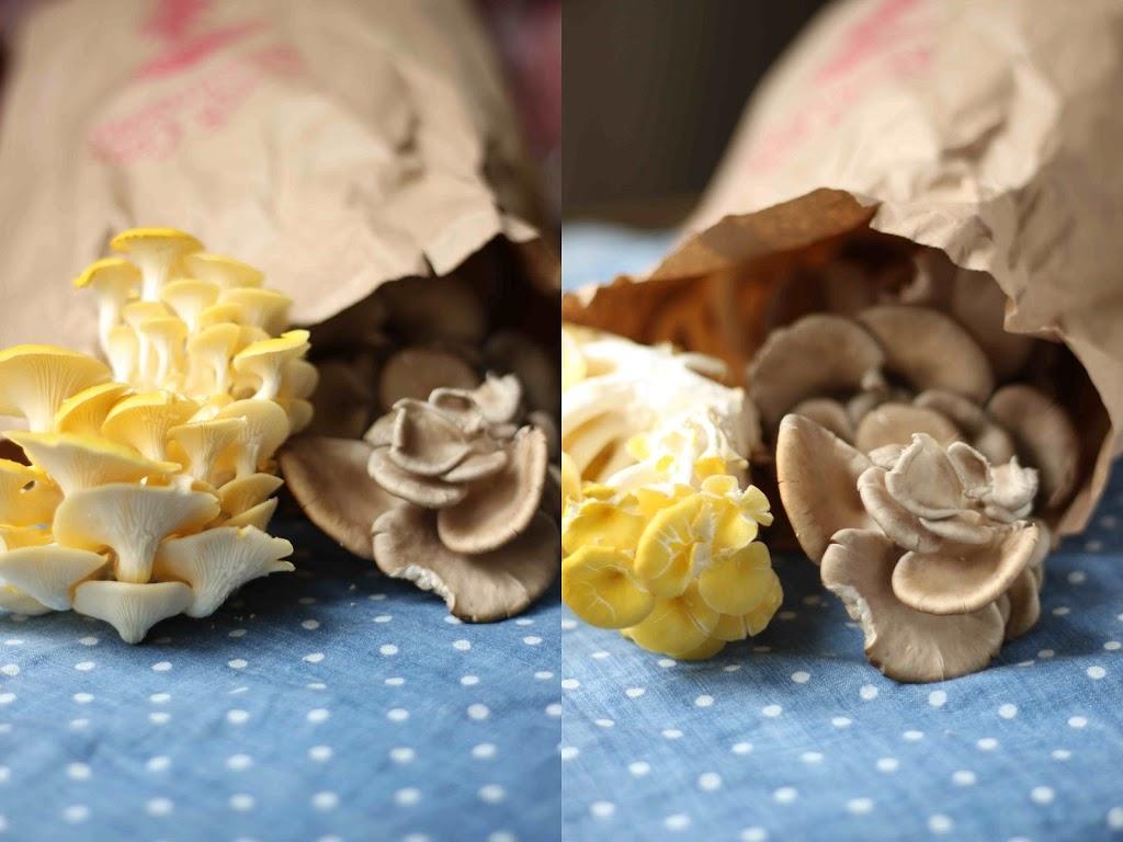 Blog_oystermushrooms.jpg