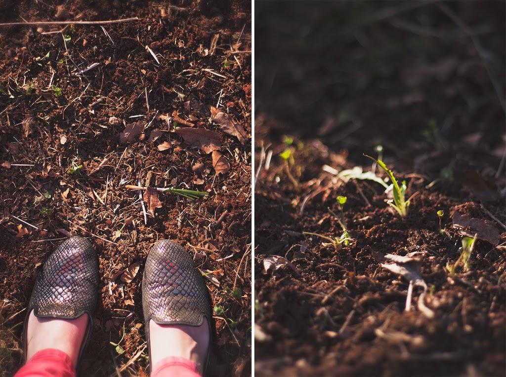 springlinklove3.jpg
