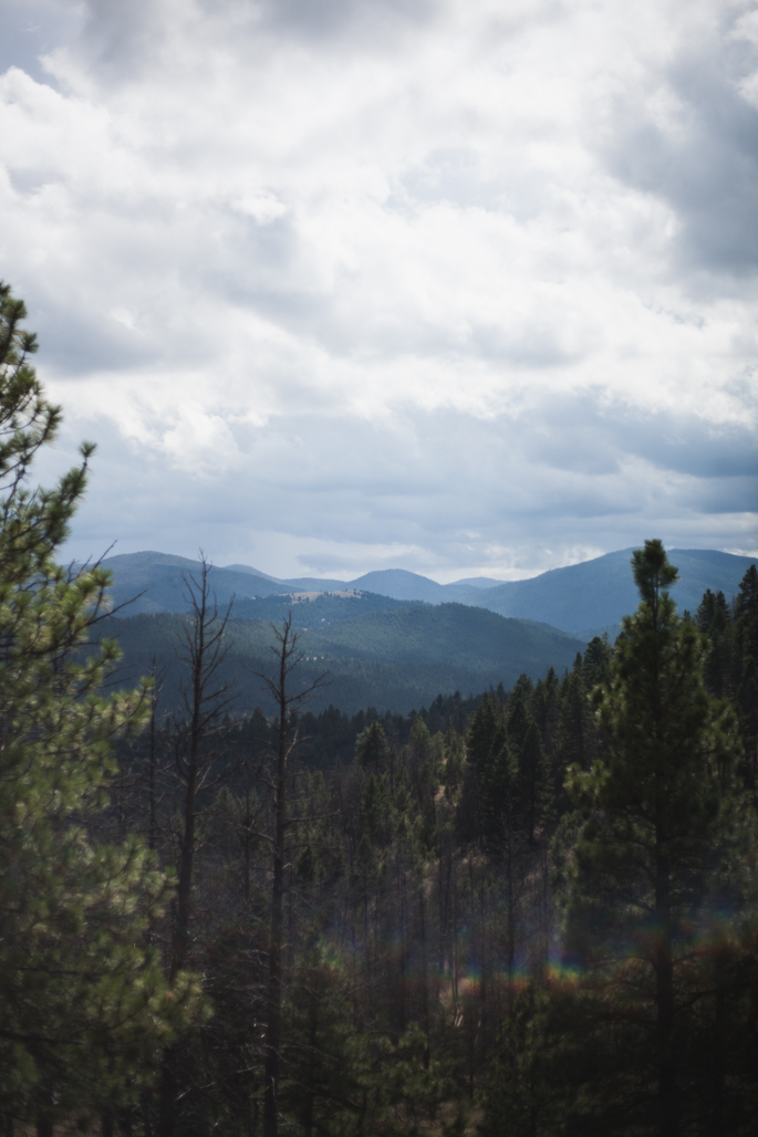montana beauty | will frolic for food