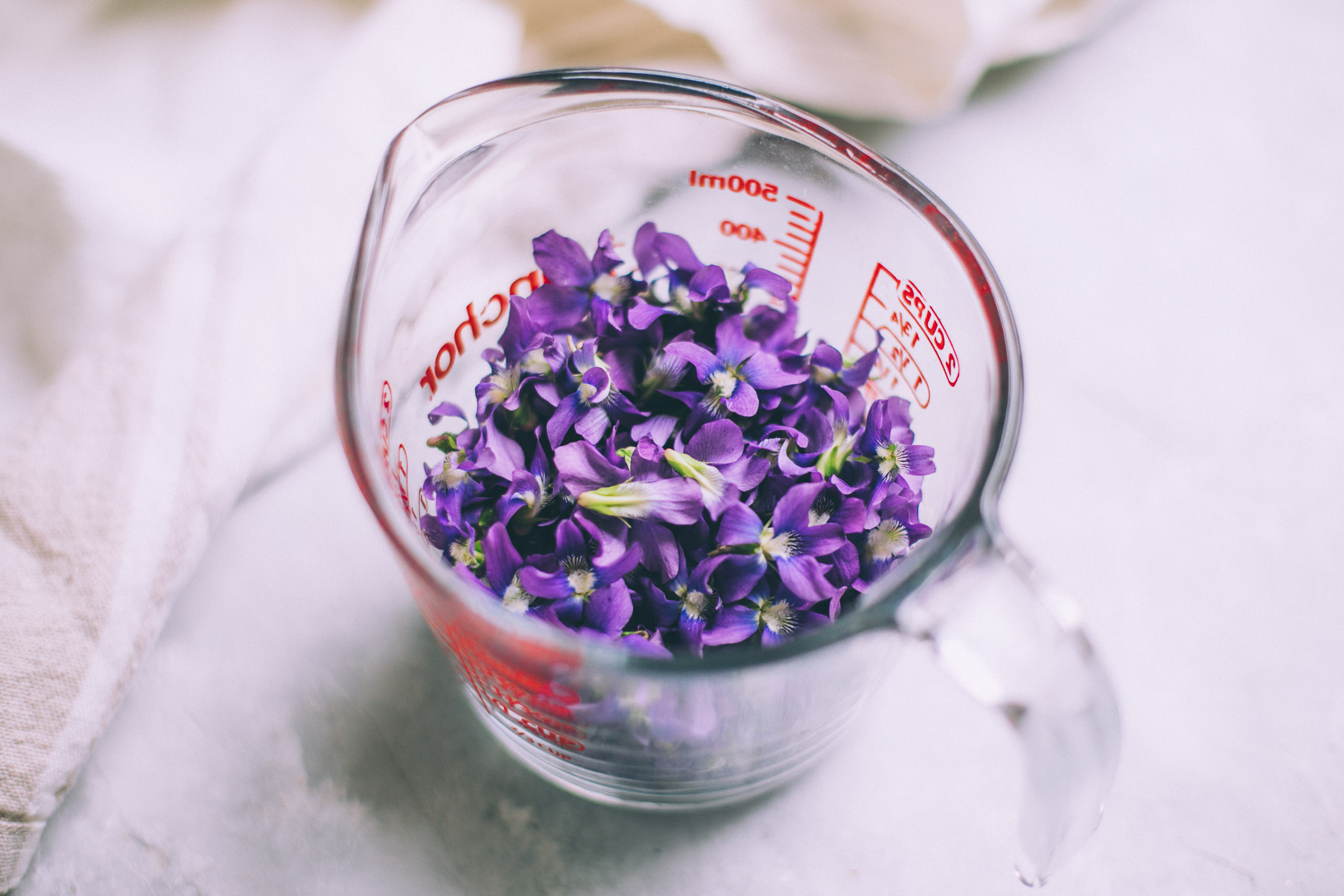 how to make wild violet syrup with honey -- will frolic for food blog