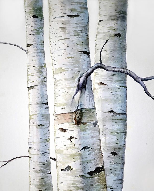 The birch tree cannot thrive unless its roots are in moist shade and its crown gets full sun. One can obtain those objectives by planting three birches together. -