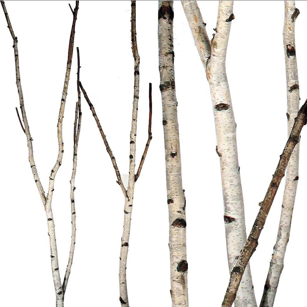 birch-forks-2.jpg