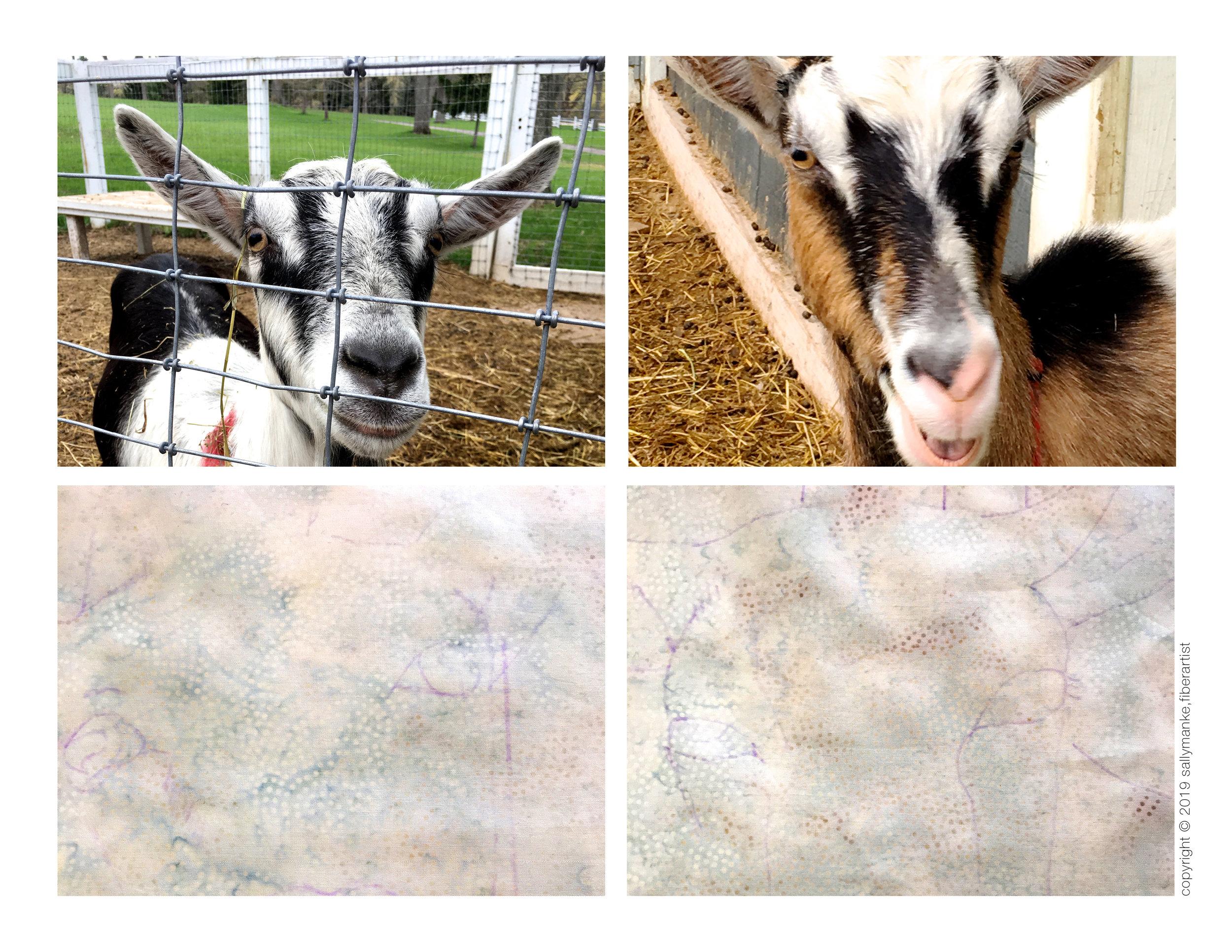 step 1 goat.jpg