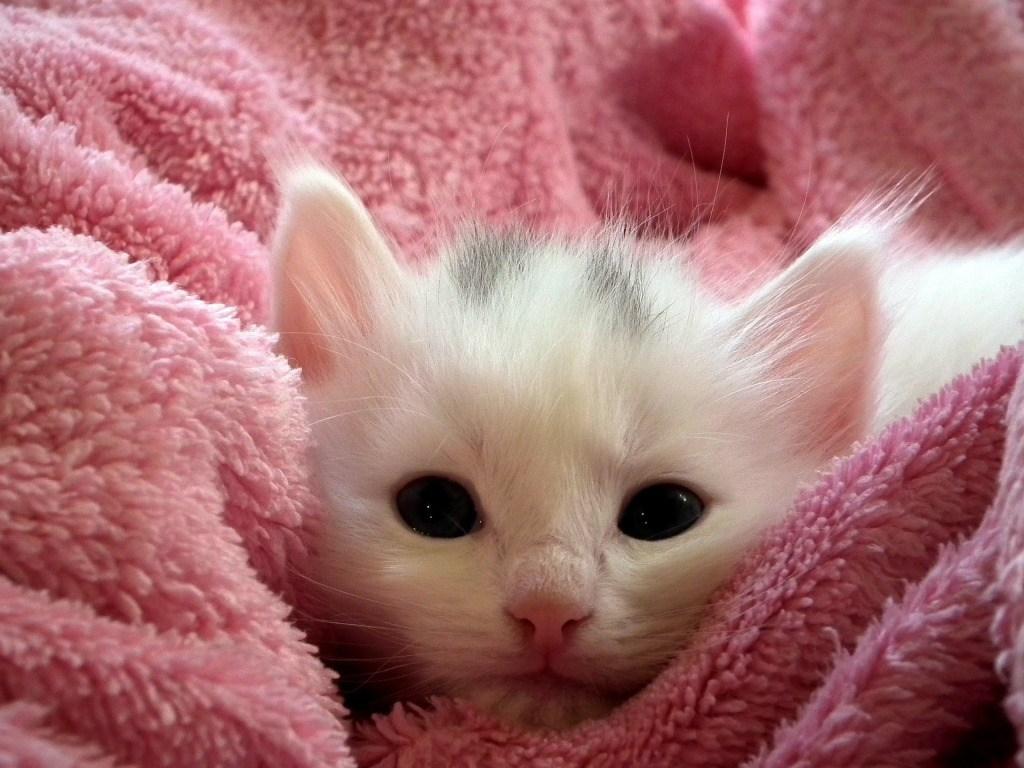 poor kitten.jpg