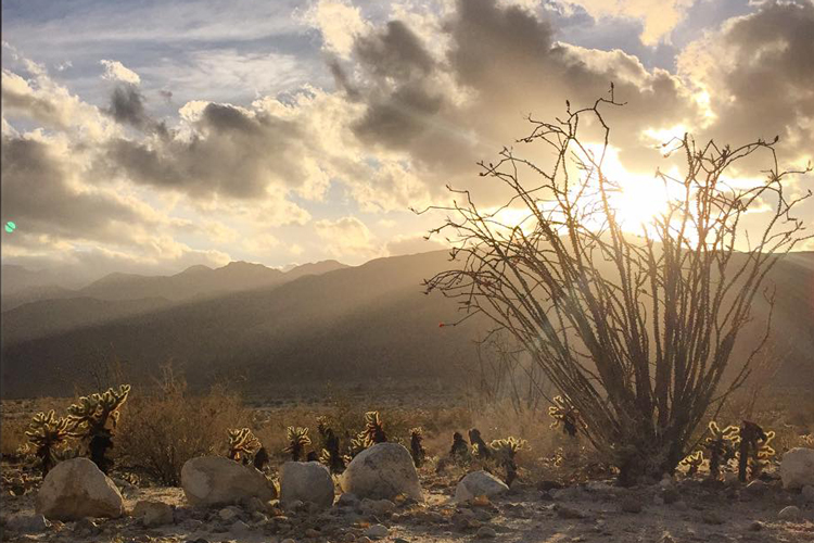 Ocotillo & sunset: Anza Borrego State Park