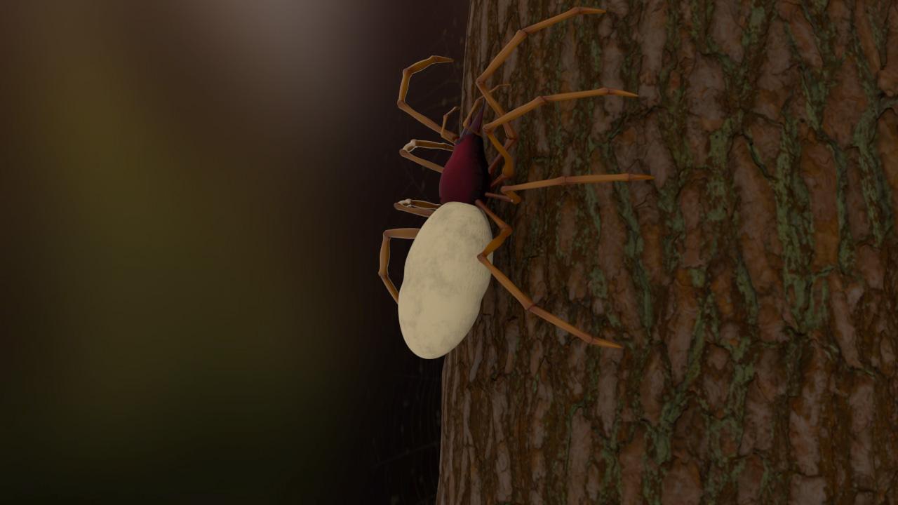 Spider_color.jpg
