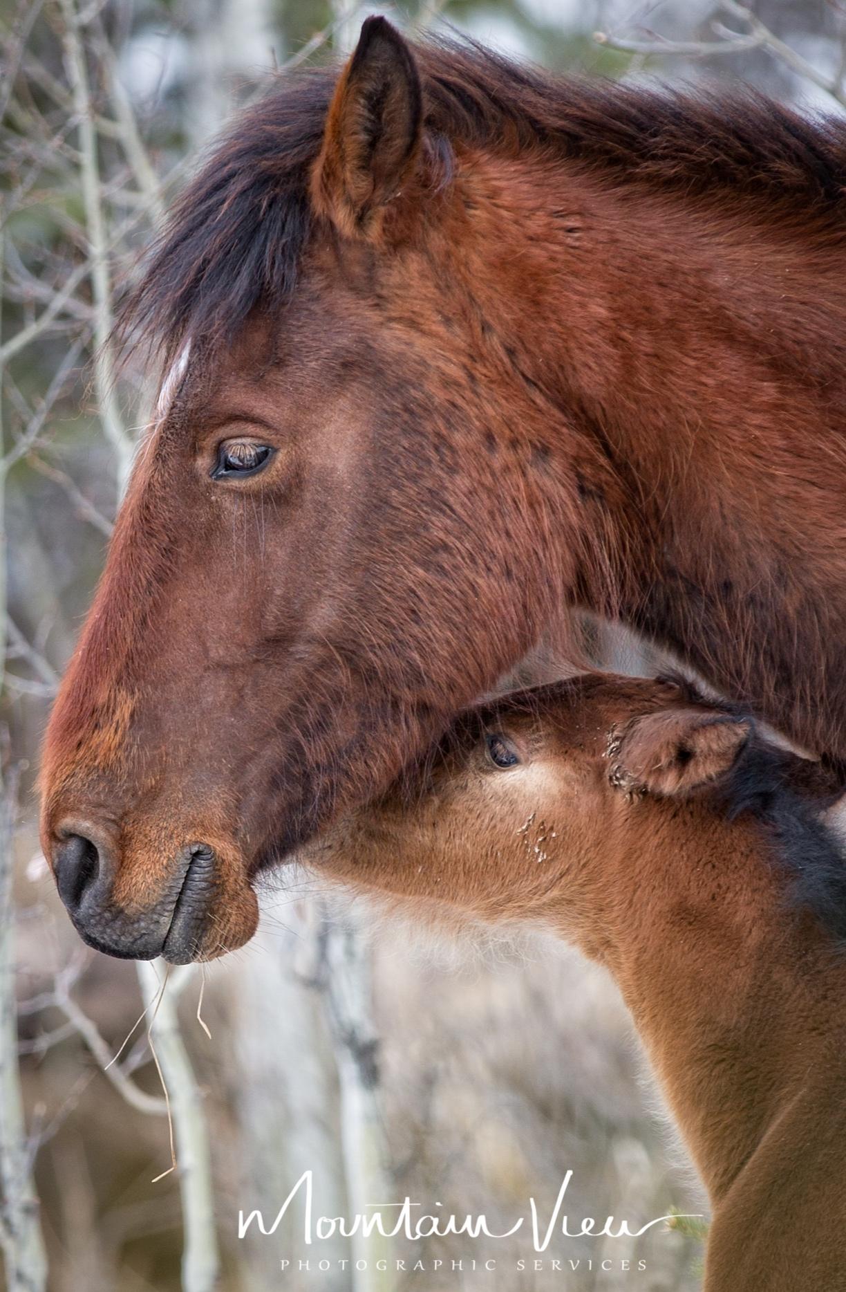 wild+horses+may+6-1.jpg