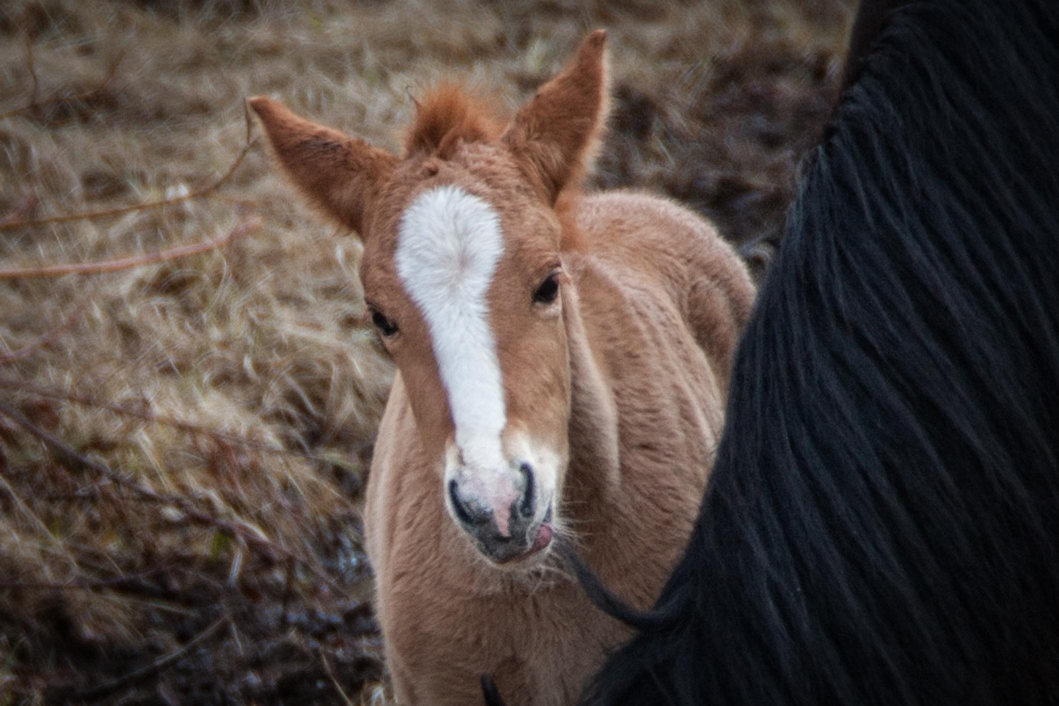 Wild Horses May 2019-20.jpg