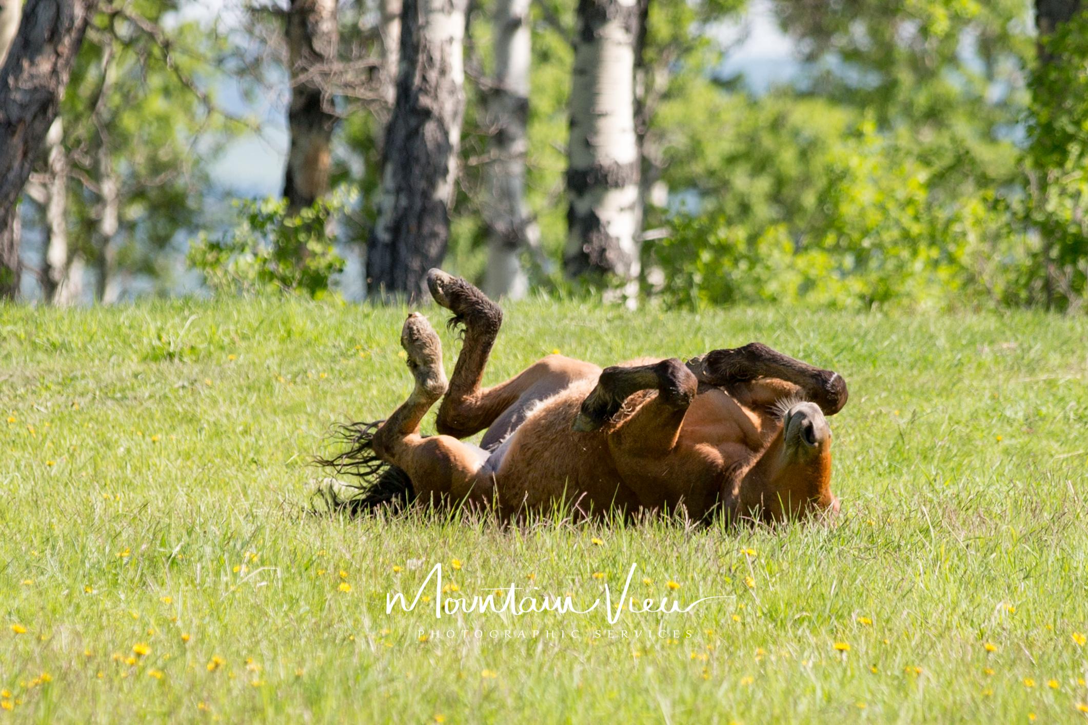 Wild Horse Tour June 8-30.jpg