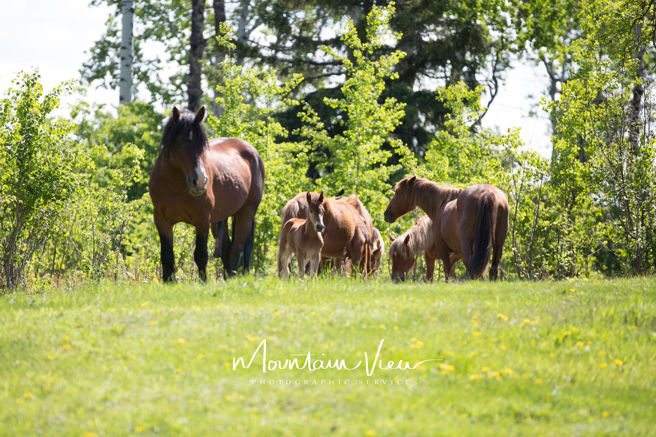 Wild Horse Tour June 8-31.jpg