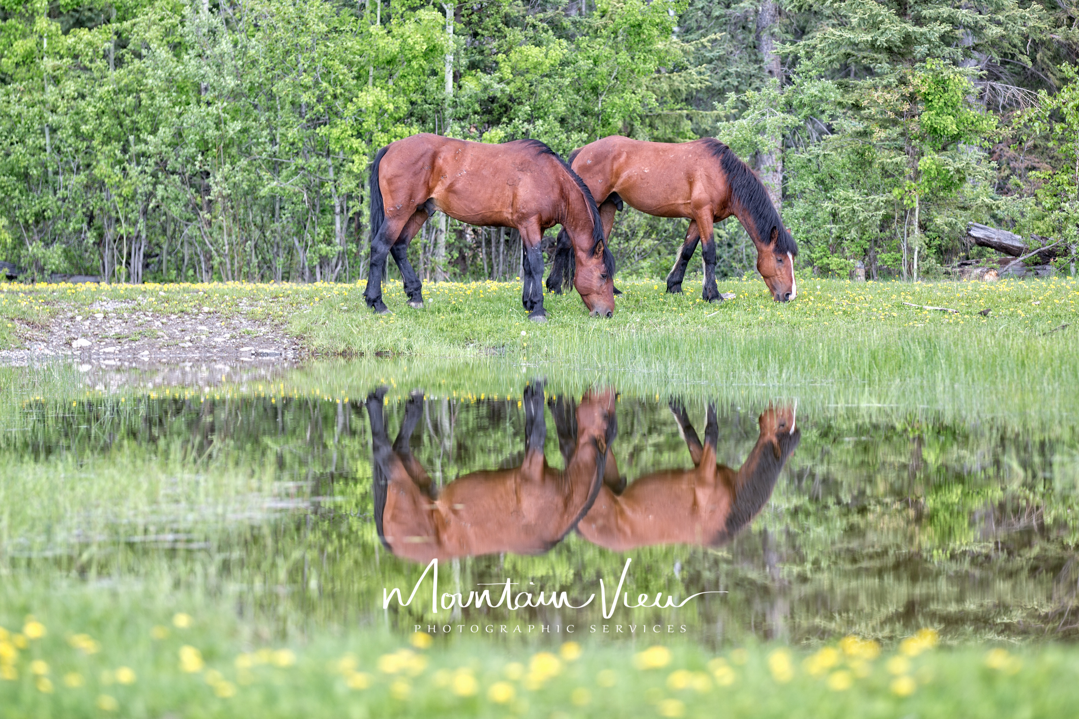 Wild Horse Tour June 8-37.jpg