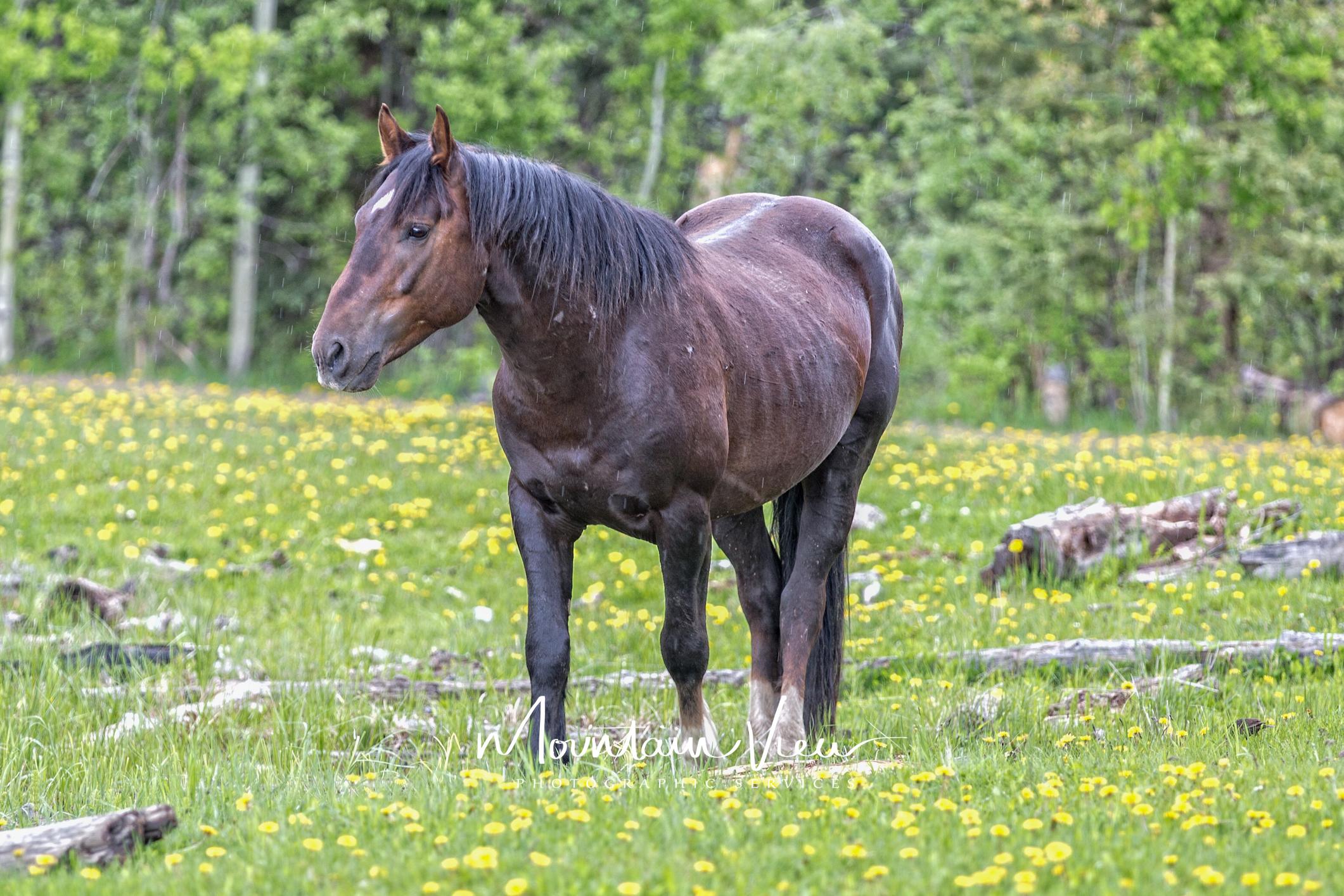 Wild Horse Tour June 8-39.jpg