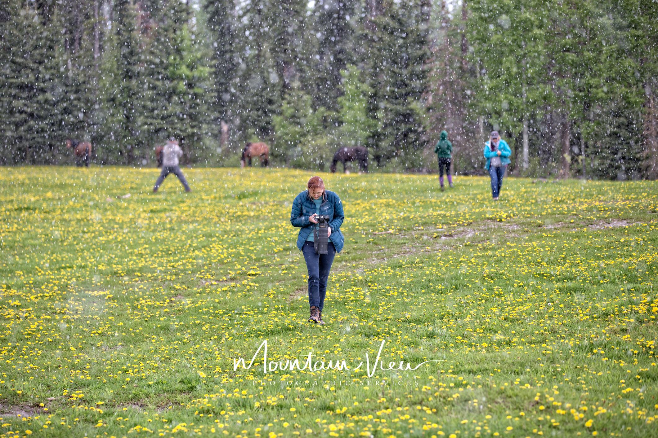 Wild Horse Tour June 8-40.jpg