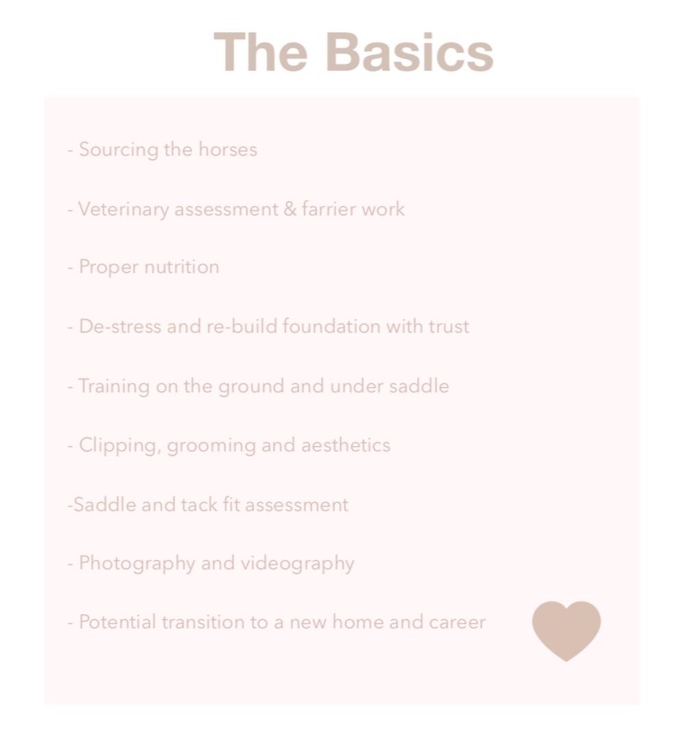 THE.BASICS.jpg