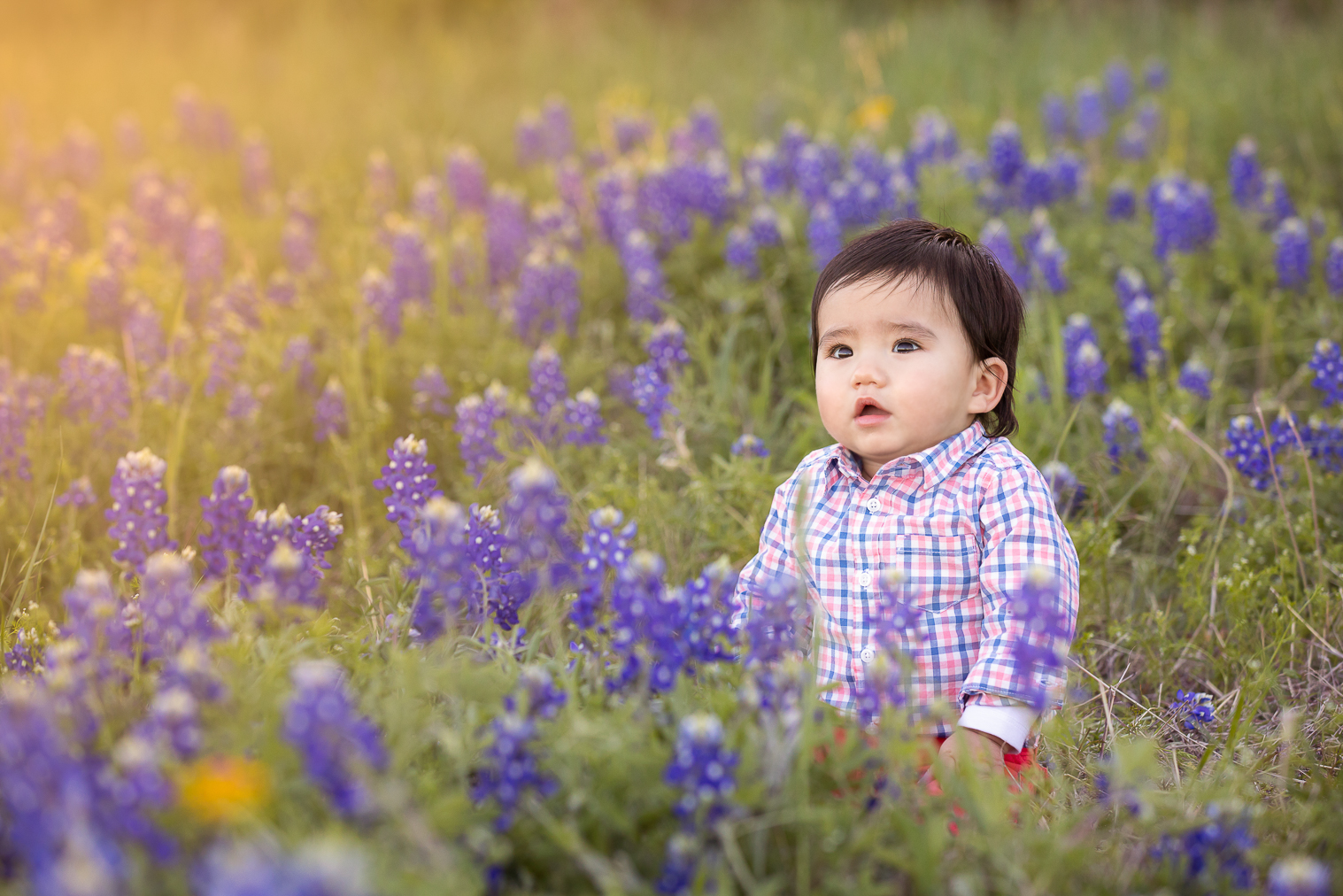 Dallas Fort Worth Bluebonnet Portraits