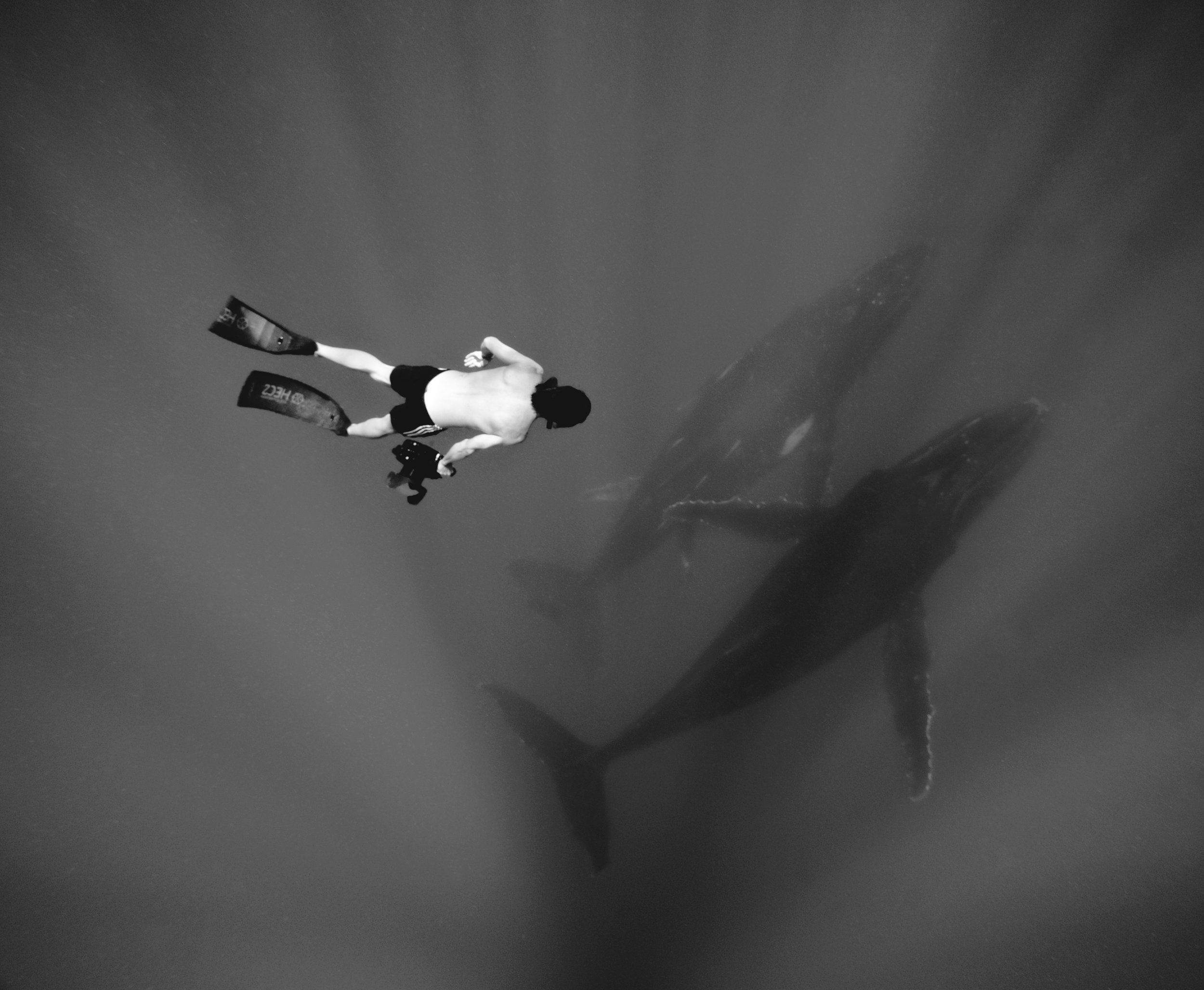 """""""DEEP SWIMMERS"""" - WINNER OF HIGHLY COMMENDED IN THE 2018 OTAGO WILDLIFE PHOTOGRAPHY COMPETITION, ANIMAL CATEGORY"""