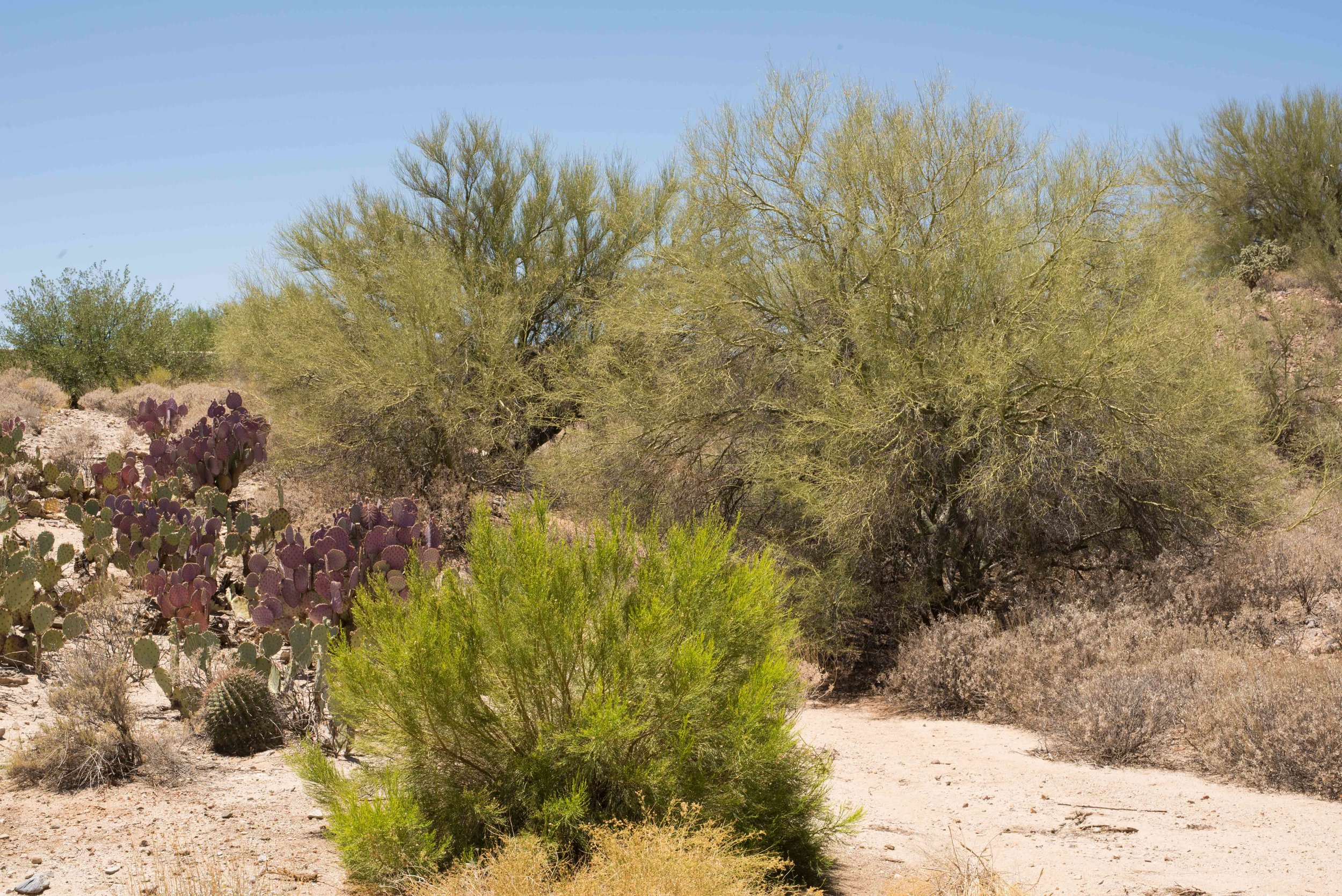 20180601-Tucson019Low Res.jpg