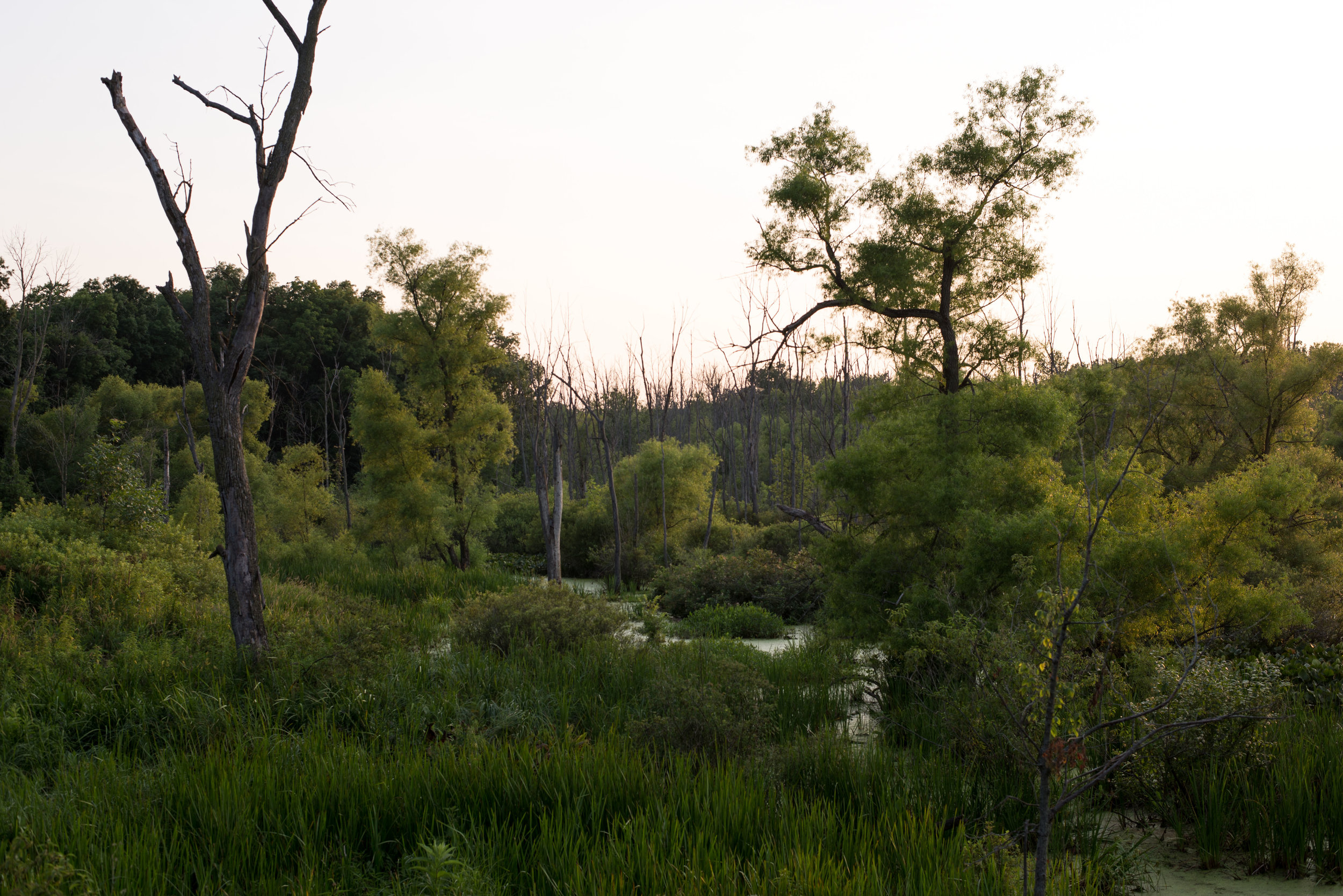 20180712-Last light at Oxbox054Low Res.jpg