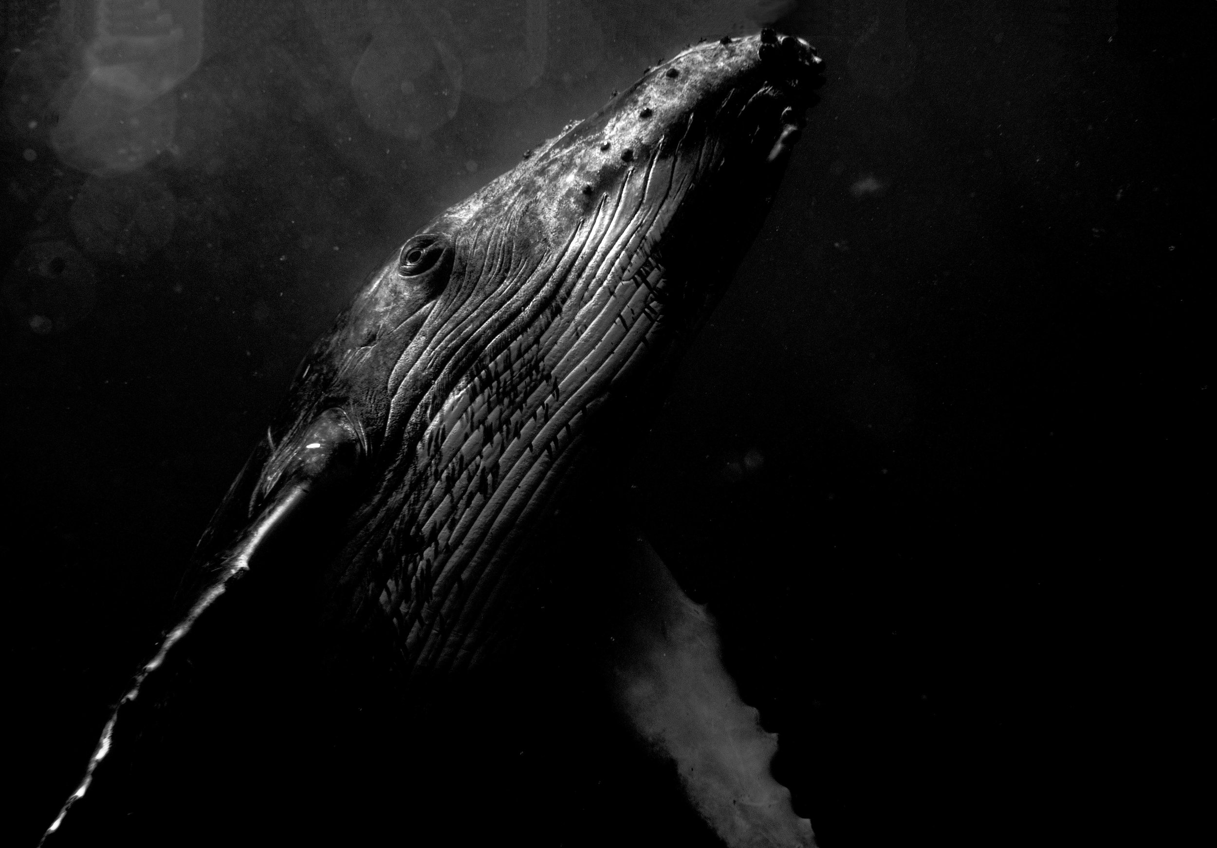 best-humpback-bw-1-of-1.jpg