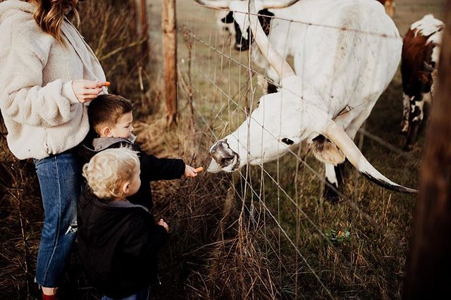 Bulls are terrifying, even behind a fence. These boys, fearless! • • • • #portlandphotographer #pdxphotographer #pdxmom #helloadventure  #joyfulmamas #pnwcanon #motherhoodunplugged #morherhoodinspired #lightroom #wanderingphotographers #familycollective #muchlove_ig #love #boymom #fordandwyatt #familyphotography #iglove #familyphotographer #sunkiss #meganrosephotography #love #candidmotherhood #rawmotherhood #family #DIRTYBOOTSANDMESSYHAIR #kidsofig #igmotherhood #bull #wildheartslab