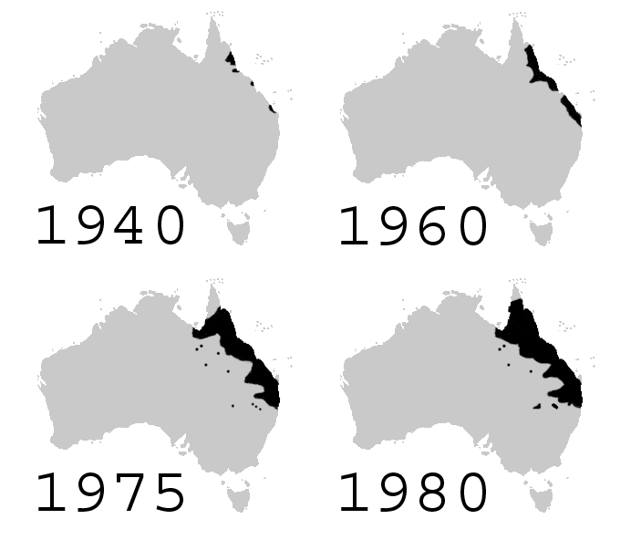 https://upload.wikimedia.org/wikipedia/commons/6/6a/Cane_toad_distribution_stills.png