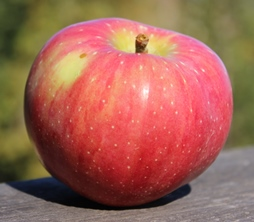 apple_Buckingham_small.JPG