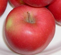 apple_chinook.jpg