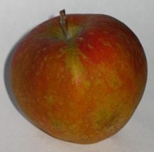 apple_cornishgilliflower_1.JPG