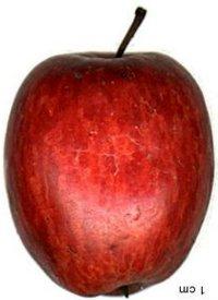 apple_foxwhelp.jpg