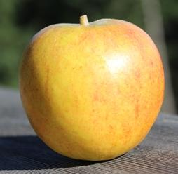 apple_Holstein_small.JPG
