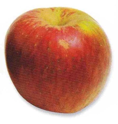 apple_mariborka.jpg